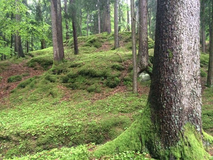 Forest Therapy at Miramonti Boutique Hotel offline nature