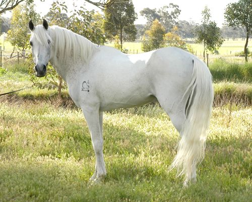 17 Best images about White Horses on Pinterest | White ...