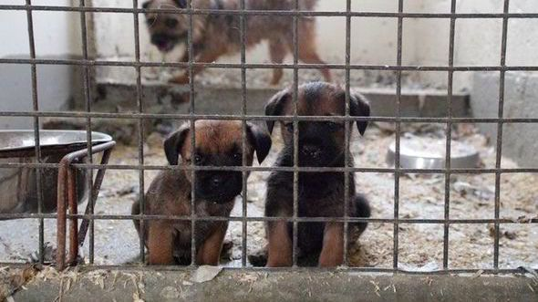 SAY NO TO HORRIFYING PUPPY MILL CRUELTY! DEMAND Salford and Leeds Councils: CLOSE Dogs4Us and BAN THE SALE OF PUPPY MILL PUPPIES IN PET SHOPS NOW!