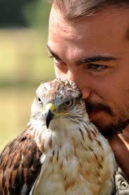 ragadozó madarak - Google keresés