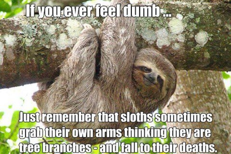 Sloth Meme Can You Not