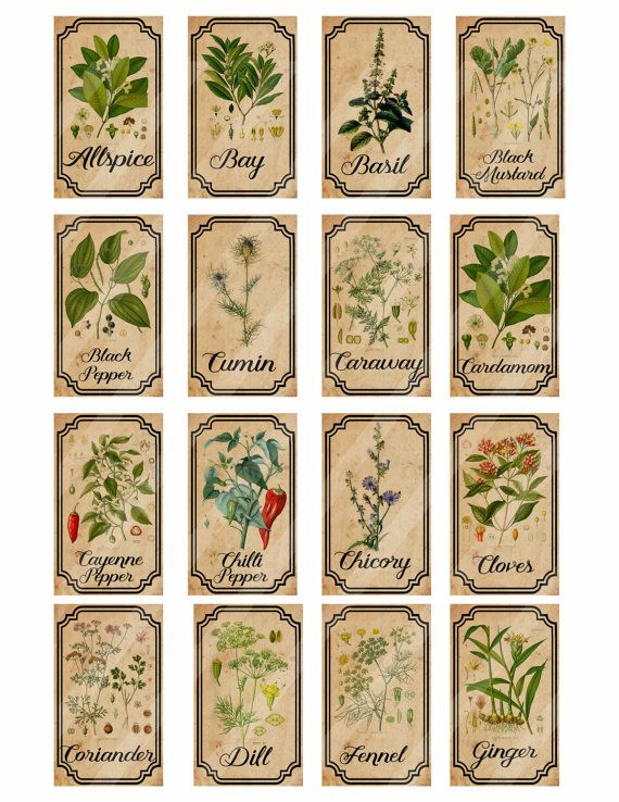 Herb and spice printable apothecary labels for bottles, jars, stickers or as scrapbook embellishments.  28 labels each measuring 1.5 x 2.5 inches  Sheets are 8.5 x 11 - A4  You will recieve 2 high resolution 300dpi JPEG files  The watermark will not be visible on the file you receive.  This is a digital sheet which you download and print yourself - no need to wait. You can DOWNLOAD INSTANTLY Allspice Bay Basil Black Mustard Black Pepper Cumin Caraway Cardamom Cayenne Pepper Chilli Pepper…