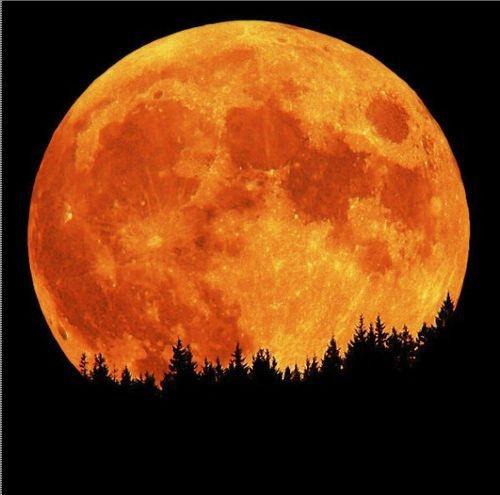 moonscapeHarvest Moon, Orange, Nature, Autumn, Beautiful Moon, Moon, Full Moon, Harvestmoon, The Moon