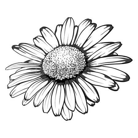 Gerbera Daisy Line Drawing Les 25 meilleures id&#...