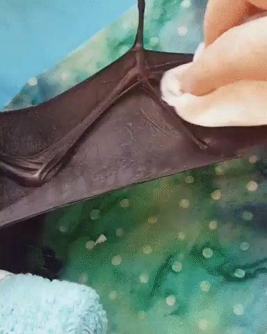 little bat cleaning