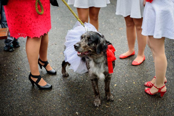 svatební pes