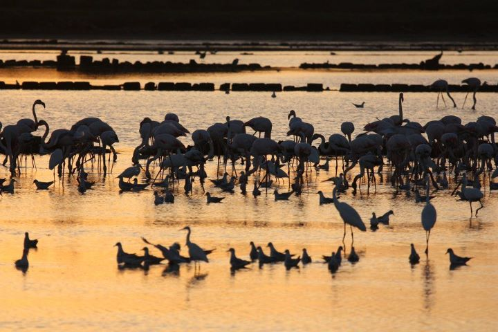 #Flamingos relax at their perfect habitat of  #Trapani salt pans. Amazing colours of #Sicily #sunset   www.bebtrapanigranveliero.it