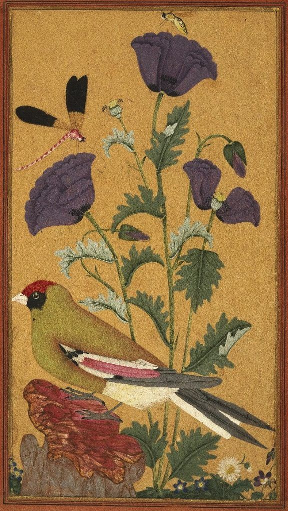 Finch, Poppies, Dragonfly, and Bee. Indian, 1650-1670. -southern Indian region known as the Deccan, in the state of Golconda.Opaque watercolour and gold on paper, 11 1/2 x 7 3/4 inches. ~via Brooklyn Museum