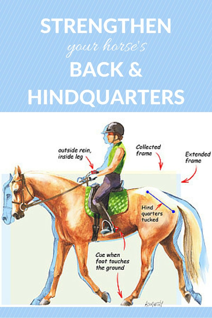 Use this simple exercise to help strengthen a horse's back and hindquarters, and to help him learn to use his hind end.