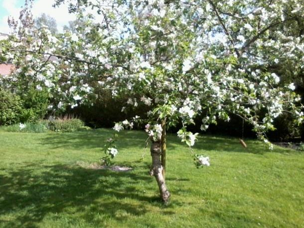 Iedere tuin heeft een appelboom nodig.
