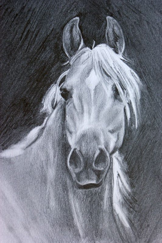 .Arabian Horse Art Original Pencil Drawing Equine Portrait by Crystal Cook
