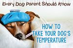 What Every Dog Parent Should Know: Taking Your Dog s Temperature