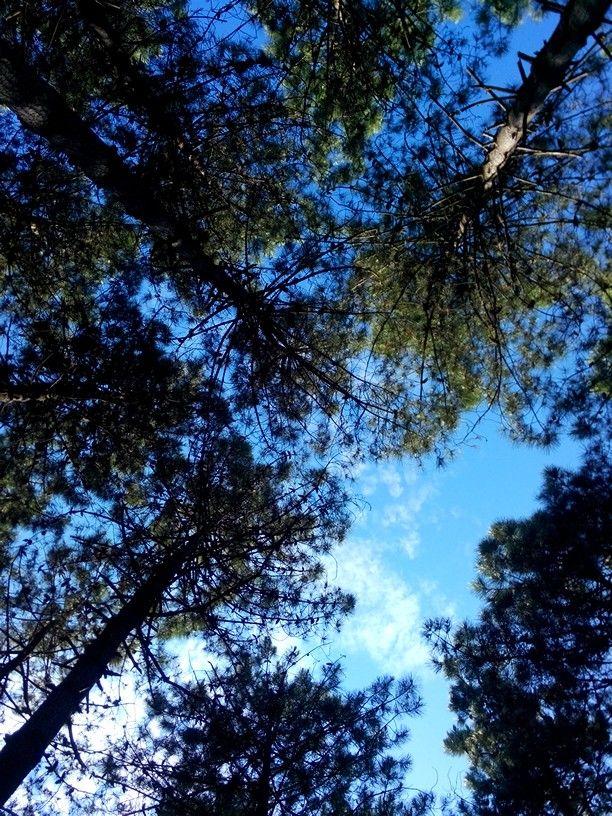 Ormandan gokyuzu