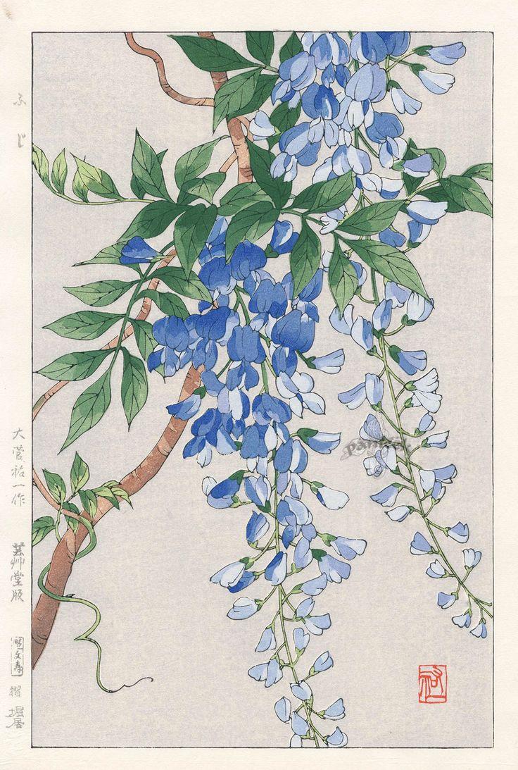 Wisteria by Yuichi Osuga from Shodo Kawarazaki Spring Flower Japanese Woodblock Prints