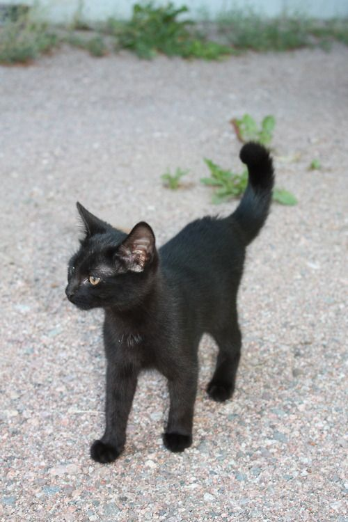 <3 black kitten