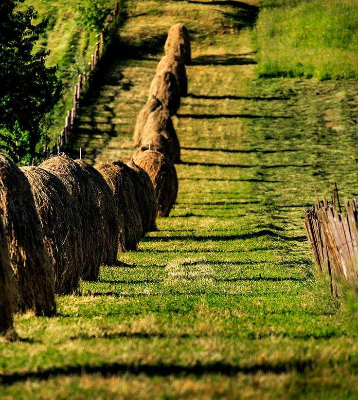 Haystacks in Bucovina (photo by Sorin Onisor)