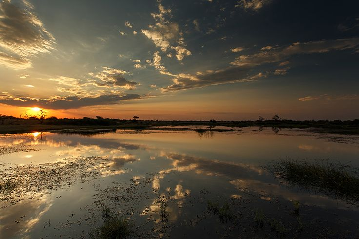 Reserva Moremi - Botswana