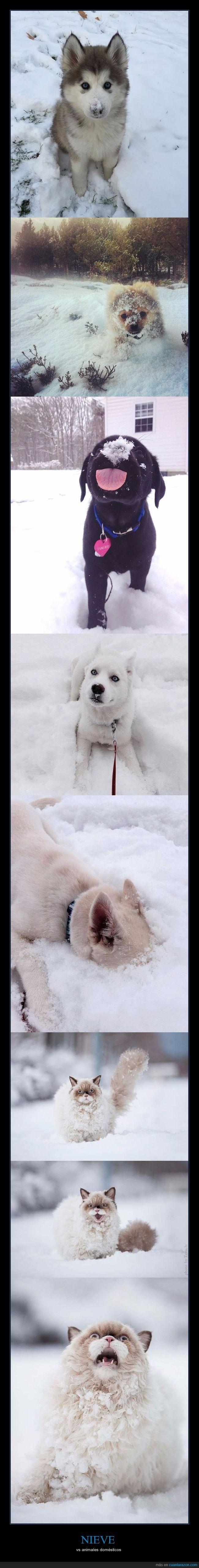 Nieve vs animales domésticos - vs animales domésticos   Gracias a http://www.cuantarazon.com/   Si quieres leer la noticia completa visita: http://www.skylight-imagen.com/nieve-vs-animales-domesticos-vs-animales-domesticos/
