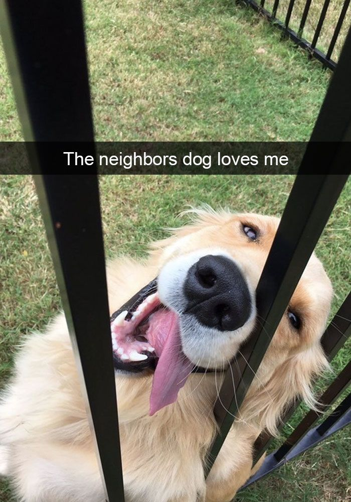 Best Dog Snapchats Ideas On Pinterest Funny Things Laughing - 28 hilarious random acts of laziness 4 cracked me up
