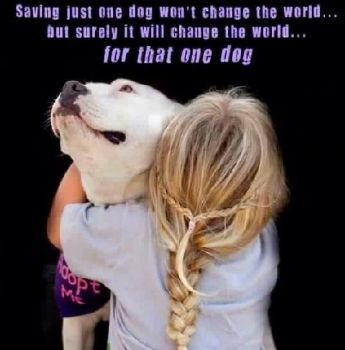Saving just one dog won't change the world...except for that one dog.