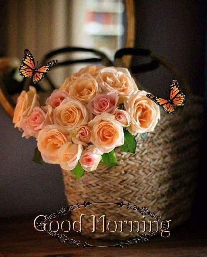300 Best Good Morning Images Hd Quotes Wishes Wallpaper And Gifs Good Moning Very Good Morning Images Good Morning Images Download Good Morning Flowers
