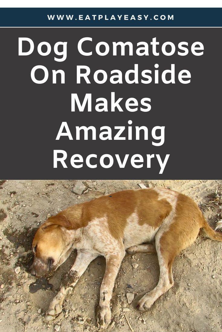Dog Comatose On Roadside Makes Amazing Recovery Dogs Dog