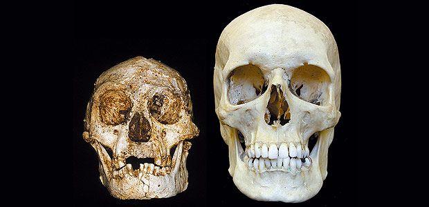 Crânio de humano moderno (direita) e do _Homo floresiensis_, espécie de hominídeo anão descoberta na Indonésia