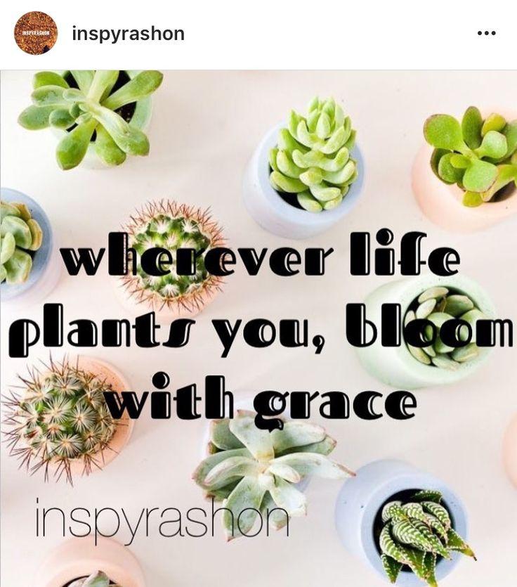 Follow @inspyrashon on Pinterest and Instagram for more!