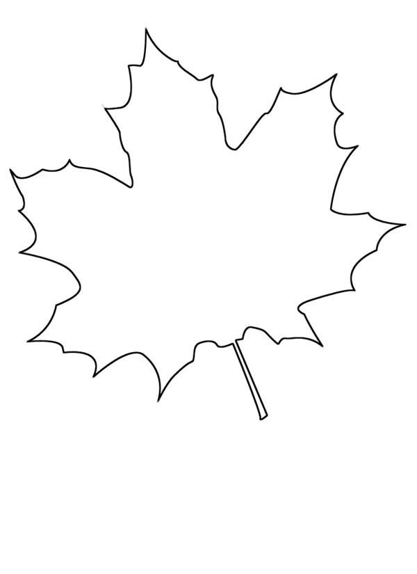 Small Maple Leaf Coloring Page