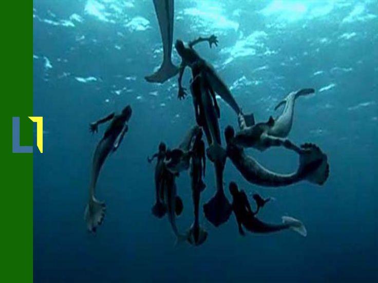 Sirenas ¿Realidad o mito? / Casos reales - Parte N. (2)
