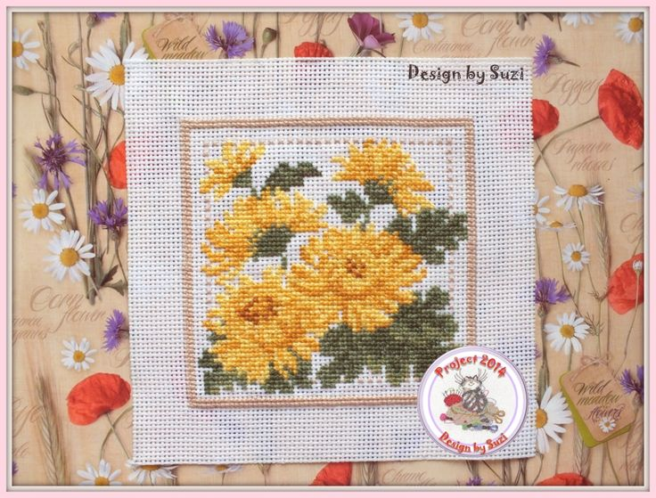 Project 2014: 36/40 Chrysanthemum (EMS Project 2010)