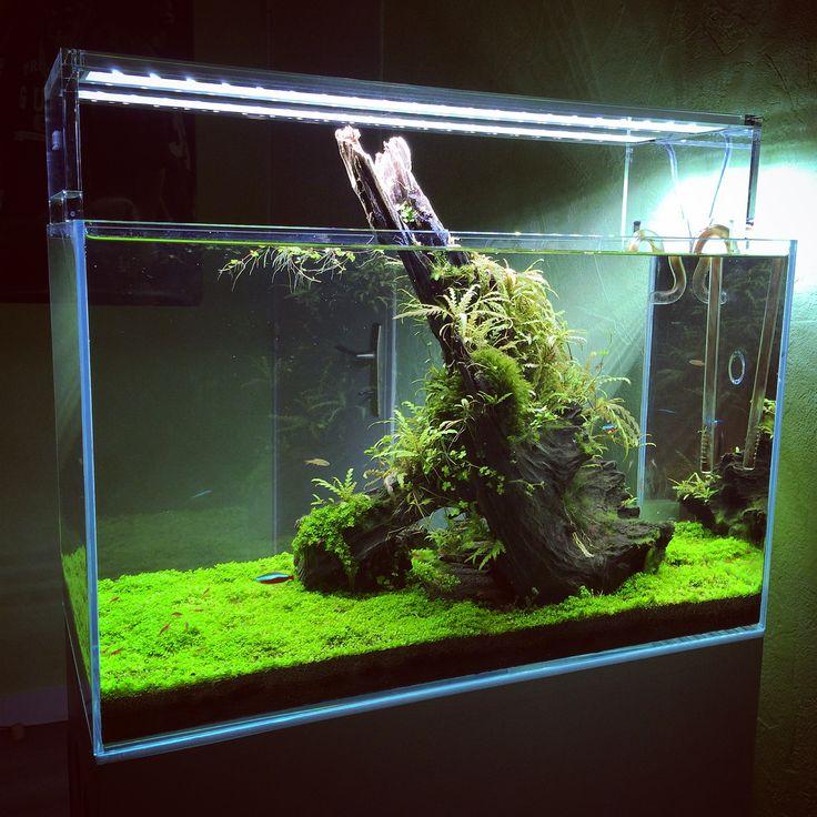 ... Planted Tanks Aquariums on Pinterest Aquascaping, Planted aquarium
