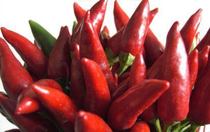 Conserva di peperoncini piccanti - Questa conserva a base di peperoncini rossi piccanti è ottima da offrire in tavola in modo da rendere più saporiti e speziati i vostri piatti. Ideali da aggiungere alla pasta o da usare nelle marinate soprattutto orientali.