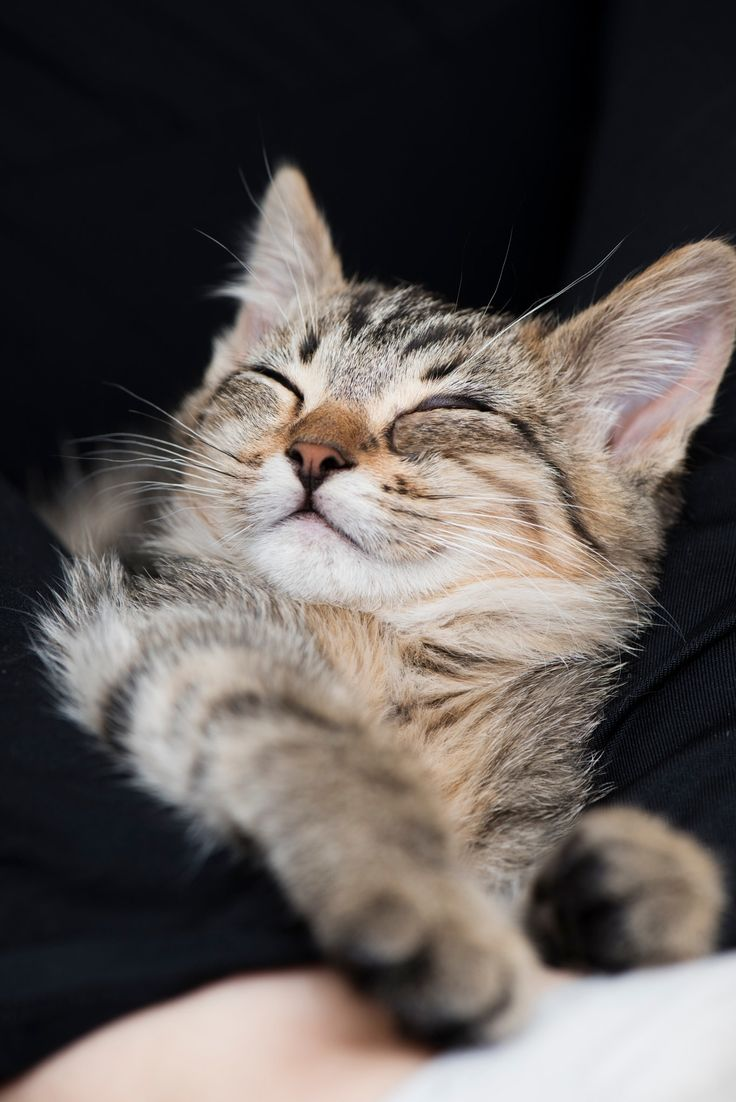 Blissful sleep - A good night's worth of sleep for a new cat.