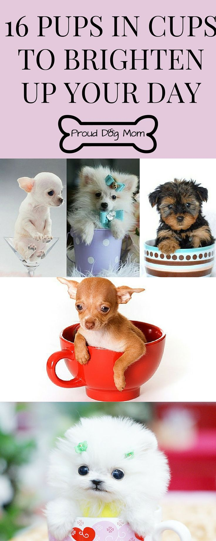 83 best images about Cute Dogs on Pinterest | Tiny puppies ...