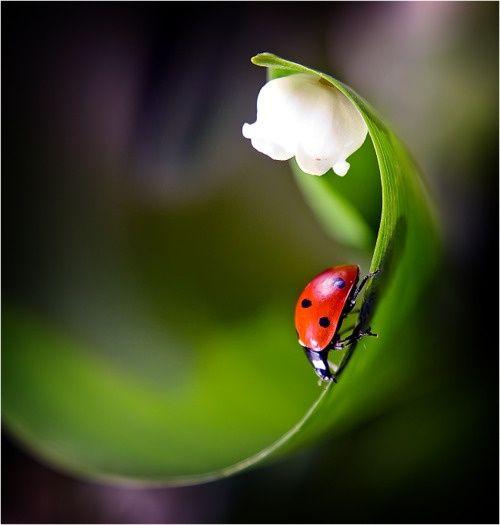 Lady Bug on a leaf, looks like a good life
