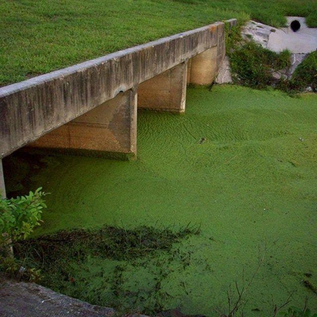 1000 Ideas About Pond Algae On Pinterest Pond Ideas Pond Maintenance And Pond Landscaping