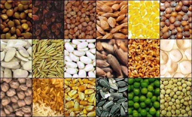 I semi sono farmaci potentissimi: costano pochissimo e ti fanno troppo bene