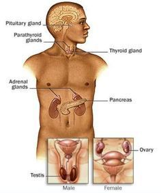 Pheochromocytoma – Causes, Symptoms, Diagnosis, Treatment and Ongoing care - Catecholamine-producing tumor. In 90% of cases, the tumors are found in the adrenal medulla, but they may also be found in other tissues derived from the neural crest cells.   Read more: http://health.tipsdiscover.com/pheochromocytoma-causes-symptoms-diagnosis-treatment-ongoing-care/#ixzz2lYHJalIL