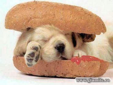 Poze Animale-Hot dog Bancuri glume poze - Glumite.ro