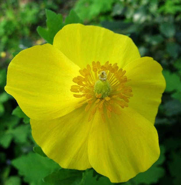 yellow things - Google Search   Stop & Smell The Flowers ...
