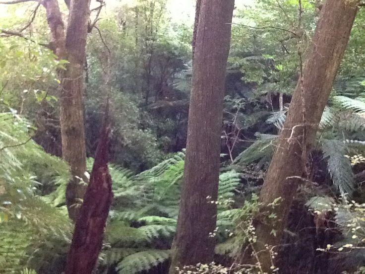 More bush Horoeka Street Track Stokes Valley New Zealand