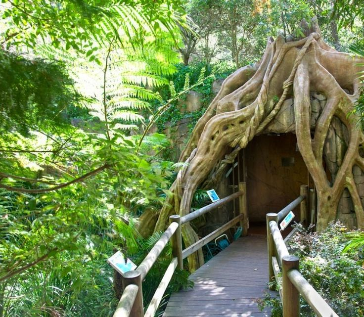 Glow Worm Cave entrance Tamborine Mountain