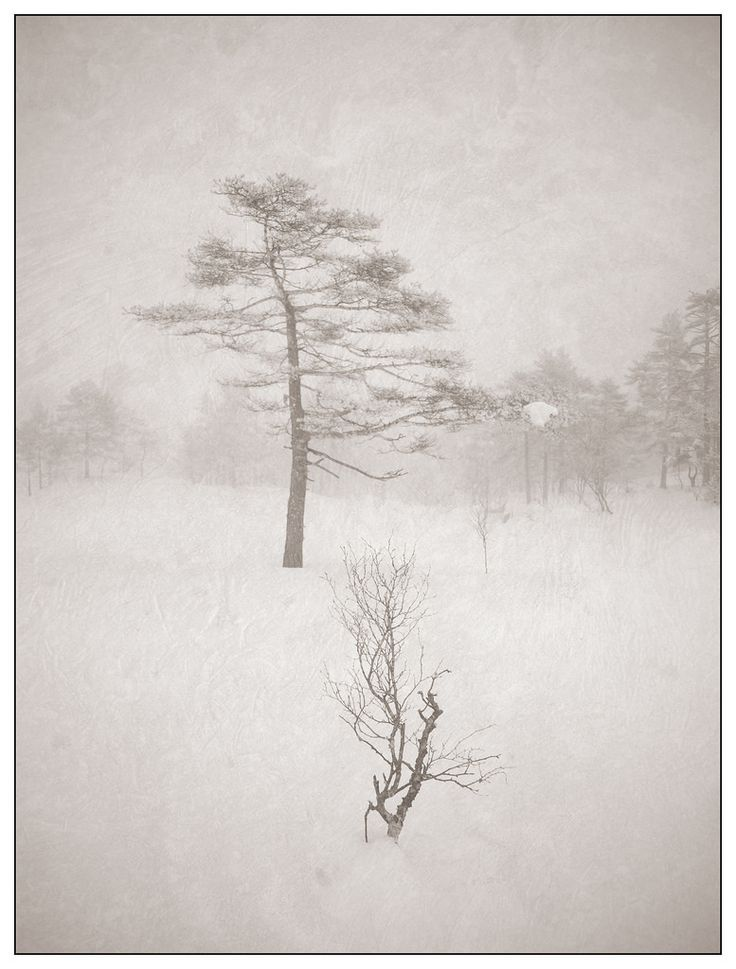 Part two of my winter trees series. All are photographed using my infrared camera and processed using the same recipe