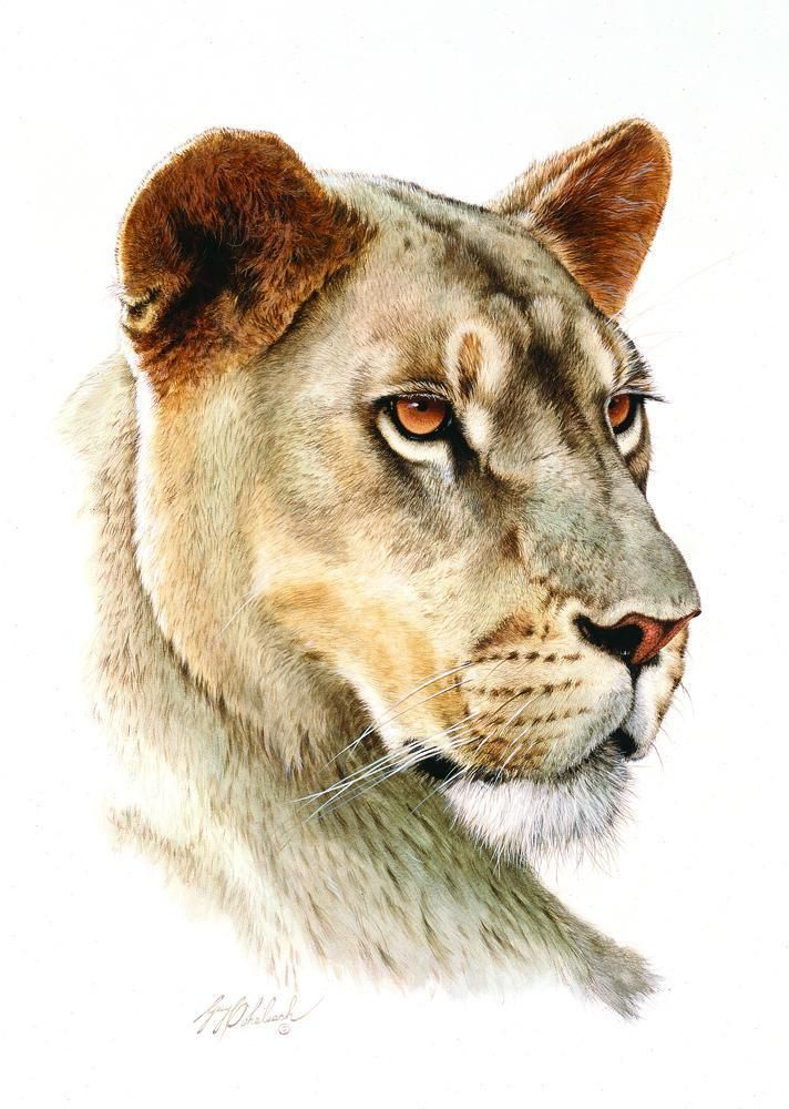 PORTRAITS OF THE BIG CATS 4
