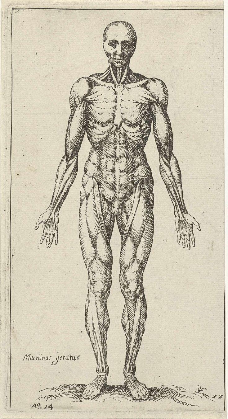 Pieter Feddes van Harlingen   Spieren in het mannelijk lichaam, Pieter Feddes van Harlingen, 1614  