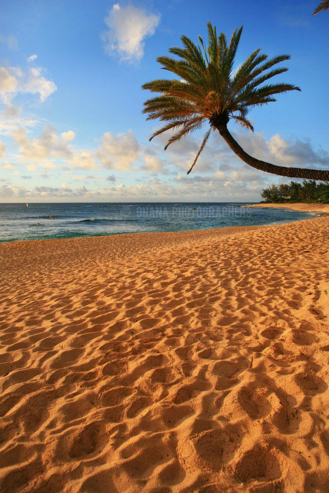 hawaii // sunset beach // north shore// oahu