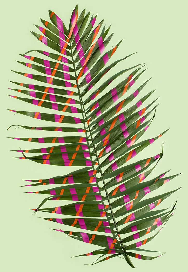 Wonderplants by Sarah Illenberger #photography #plant #leaf