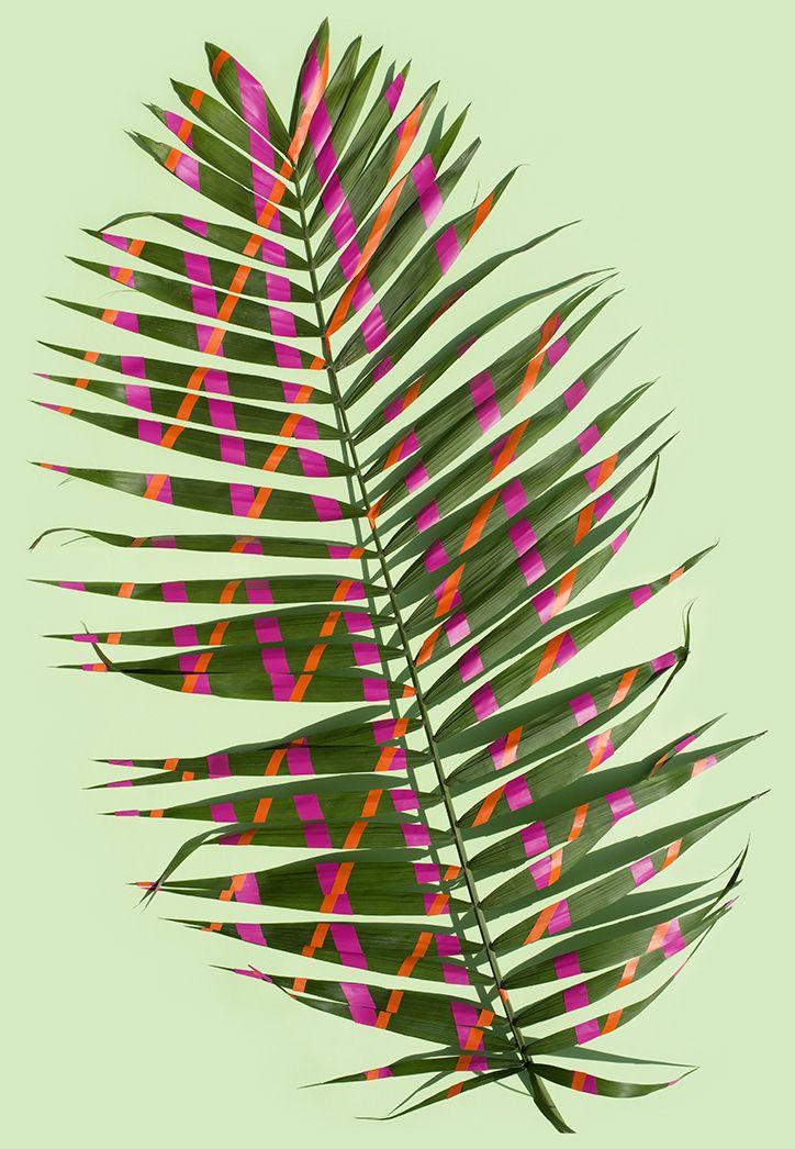 Wonderplants by Sarah Illenberger #photography #plant #leaf