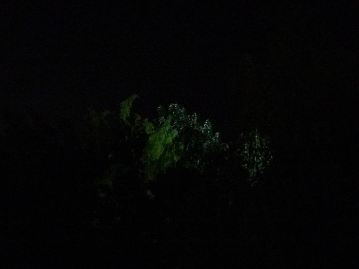 I want a smartphone with low light capacity. Is that too much to ask?